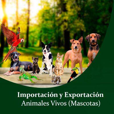 Importacion y exportacion de animales vivos , Importacion y exportacion de animales vivos domésticos , Importacion y exportacion de Mascotas